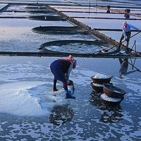 The Jingzaijiao Tile-paved Salt Fields
